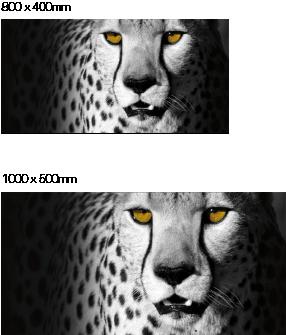 Gepard-Bild auf Edelstahl