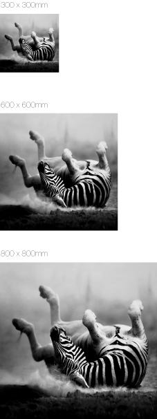 Zebra-Bild auf Edelstahl